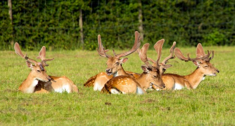 Deer DNA Testing With DNA Solutions